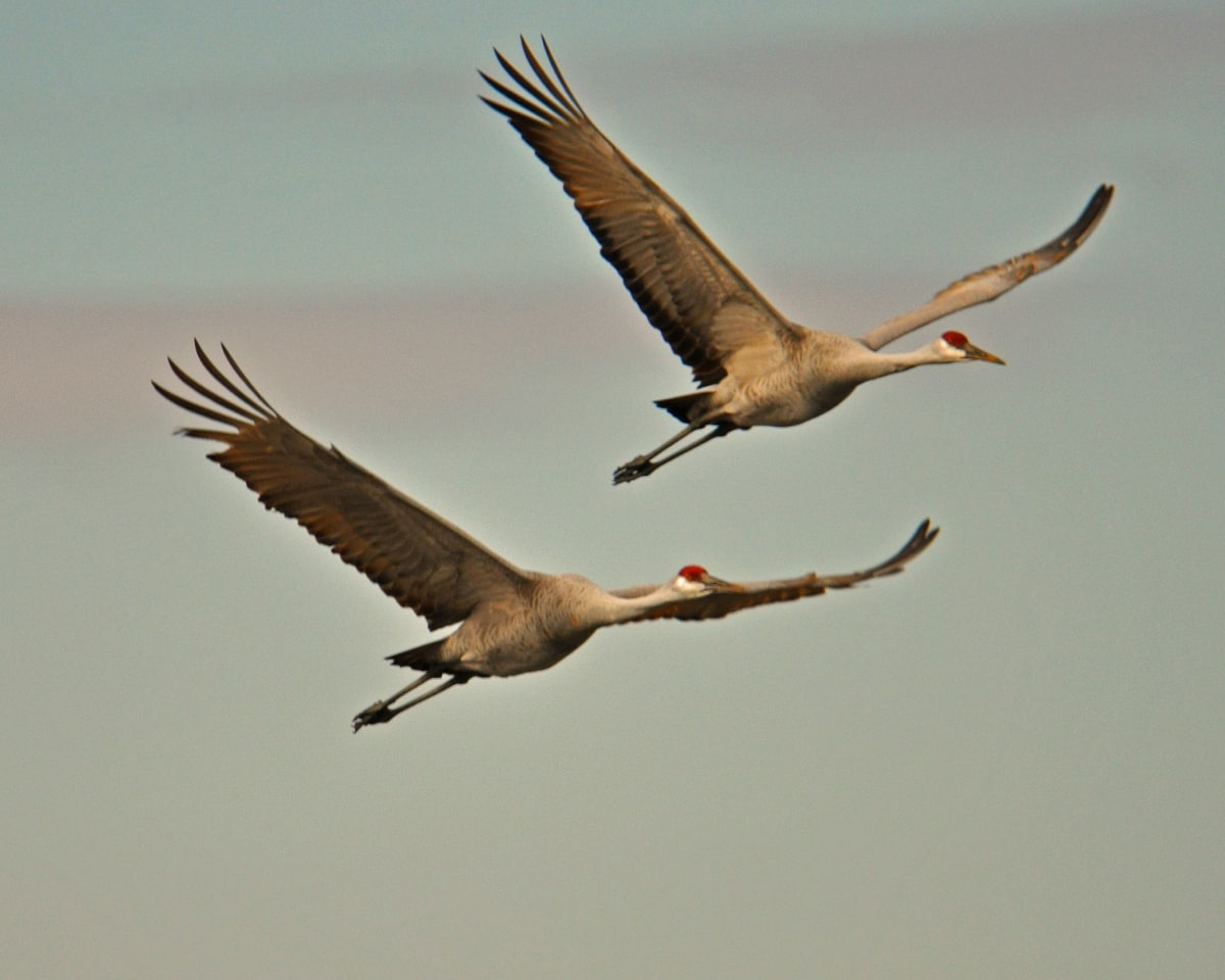 Alabama's busiest natural airport, the Wheeler National Wildlife Refuge (photos)