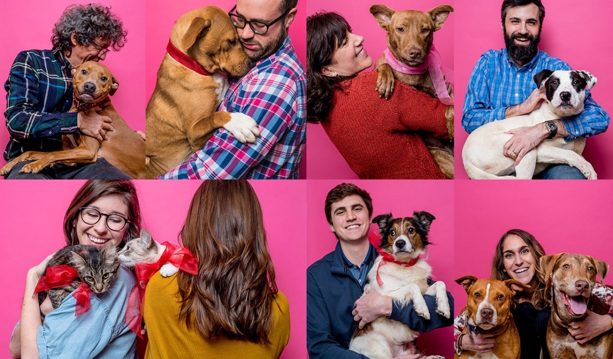 Thinking of adopting a pet from the Humane Society? CCR Architecture just paid the fee