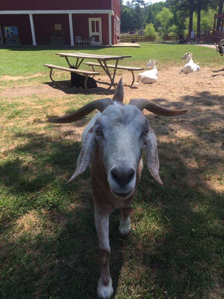 Birmingham, Oak Mountain State Park, Fall Festivals, Festivals, Animals, Petting Zoo, Goats, Animal Encounters