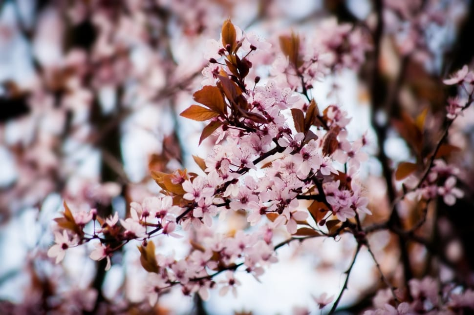 5 flowering trees to be on the lookout for this spring