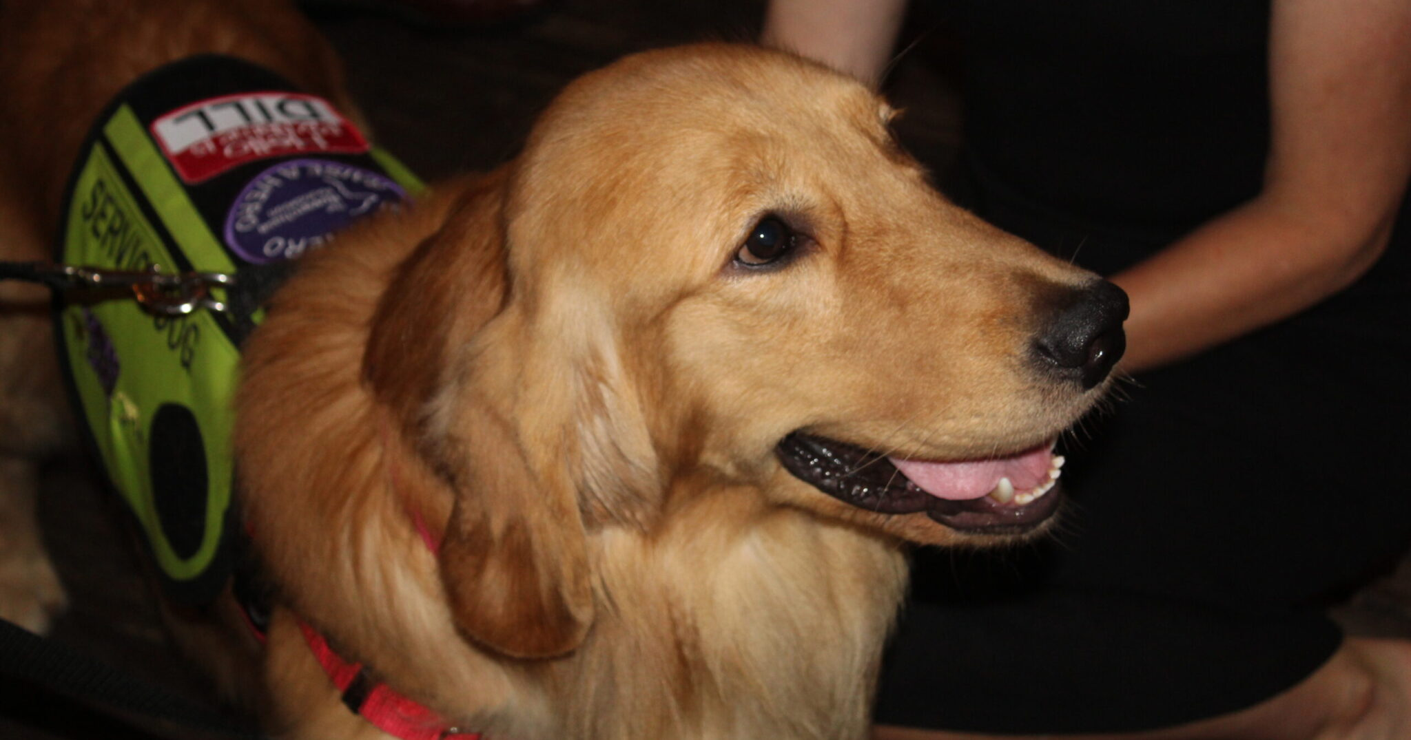 5 amazing service dogs graduate from The Roverchase Foundation program