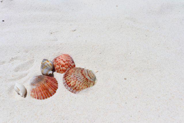 Top spots for a seashell treasure hunt on the Gulf Coast