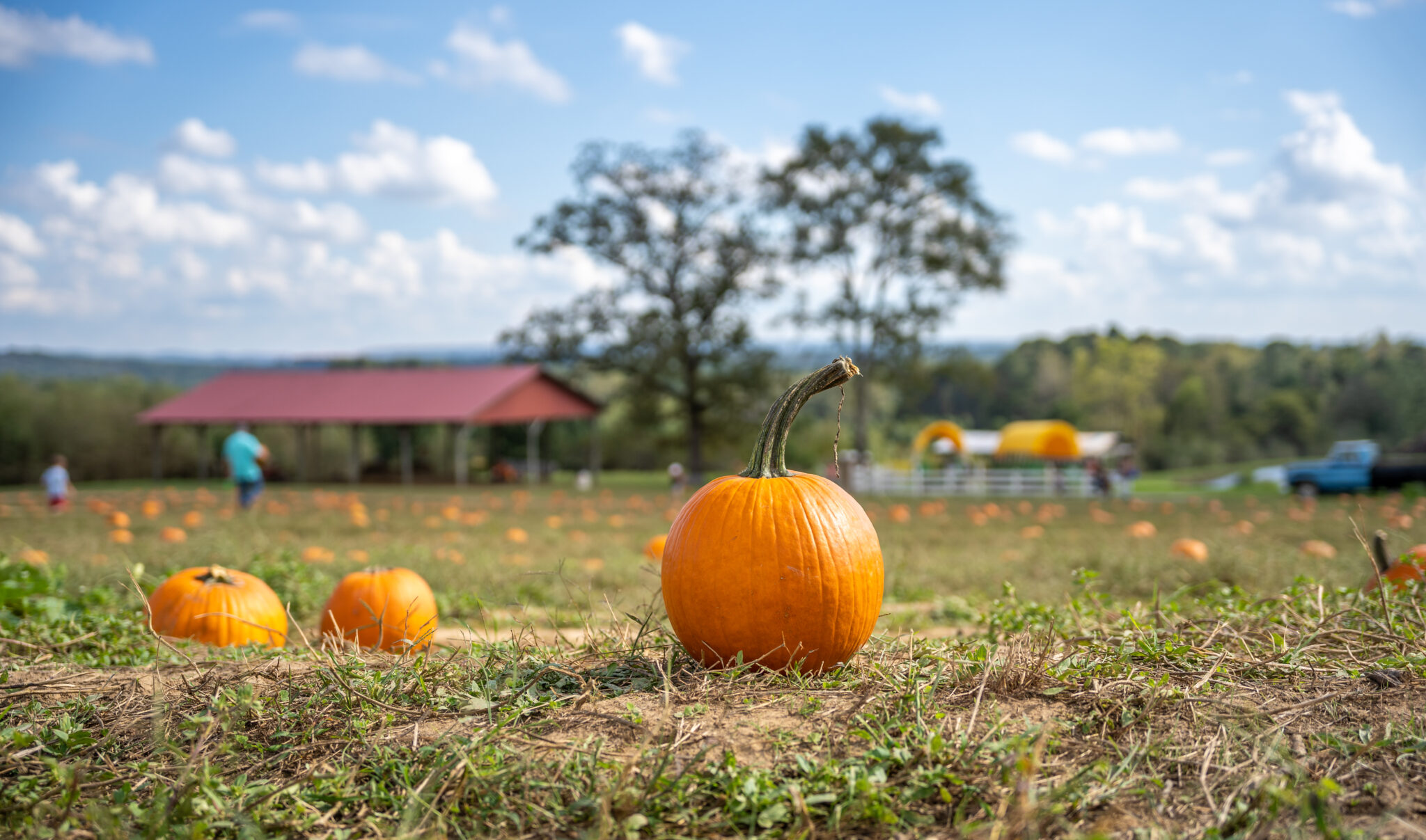 5 beloved fall traditions we can't wait to try in Birmingham